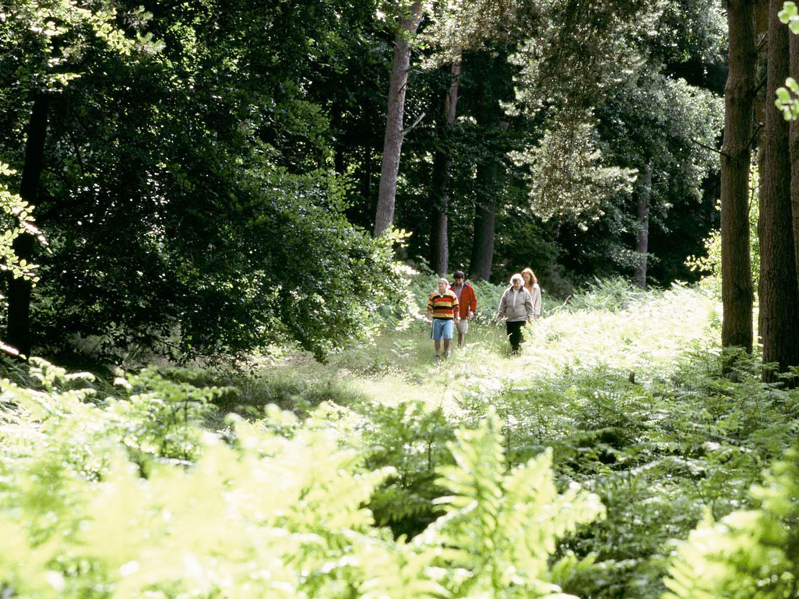 Peddars Way at Brettenham Heath (picture by Andy Tryner, courtesy of Natural England / National Trails)